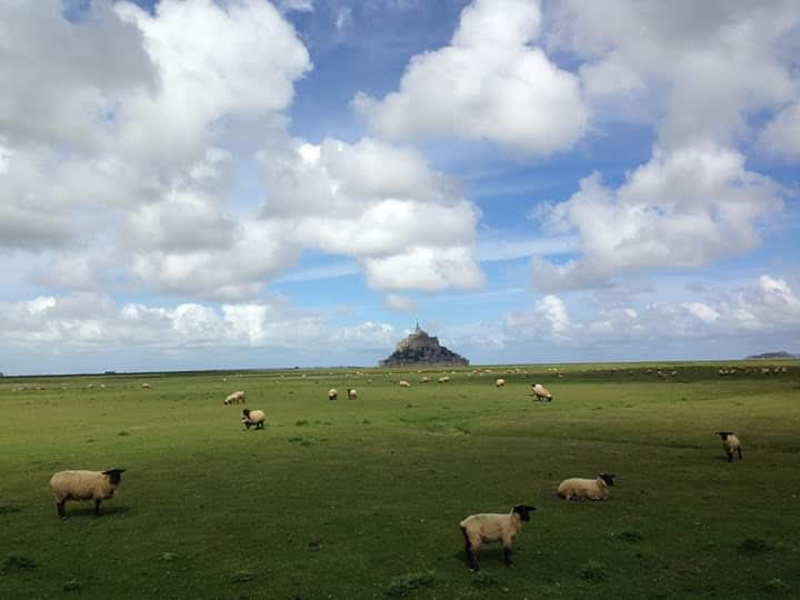 moutons_d_le_mt_site.jpg
